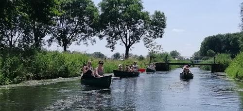 solex en kano